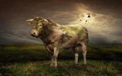 wallpaper military camouflage bull